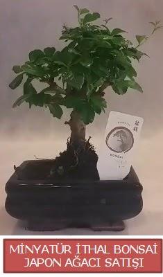 Küçük görsel bonsai japon ağacı bitkisi  Adana çiçek gönder çiçek , çiçekçi , çiçekçilik