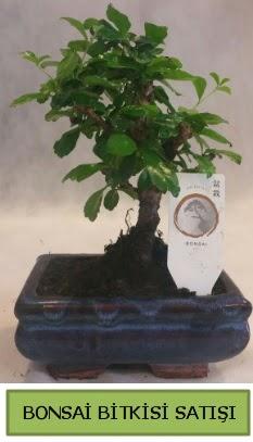 Bonsai ithal görsel minyatür japon ağacı  Adana çiçek gönder ucuz çiçek gönder