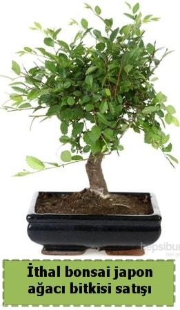 İthal bonsai saksı çiçeği Japon ağacı satışı  Adana çiçek yolla İnternetten çiçek siparişi