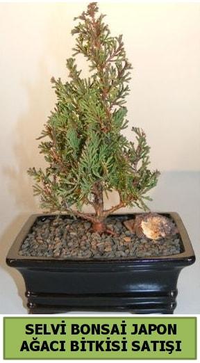 Selvi çam japon ağacı bitkisi bonsai  Adana çiçek yolla çiçekçi telefonları
