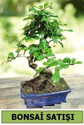 Çam bonsai japon ağacı satışı  Adana çiçek yolla çiçek satışı