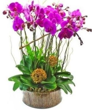 Ahşap kütükte lila mor orkide 8 li  Adana çiçek gönder internetten çiçek satışı