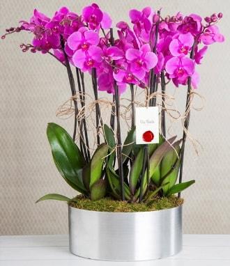 11 dallı mor orkide metal vazoda  Adana çiçek yolla çiçek gönderme sitemiz güvenlidir