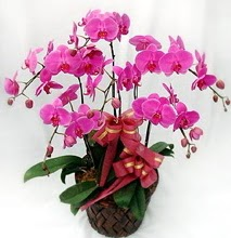 Sepet içerisinde 5 dallı lila orkide  Adana çiçek gönder ucuz çiçek gönder