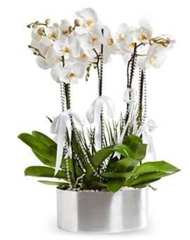 Beş dallı metal saksıda beyaz orkide  Adana çiçek yolla çiçek yolla