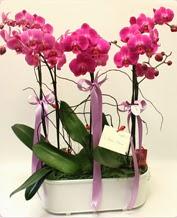 Beyaz seramik içerisinde 4 dallı orkide  Adana çiçek gönder ucuz çiçek gönder