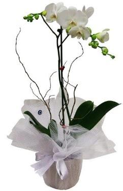 Tek dallı beyaz orkide  Adana çiçek siparişi cicek , cicekci