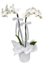 2 dallı beyaz orkide  Adana çiçek siparişi güvenli kaliteli hızlı çiçek