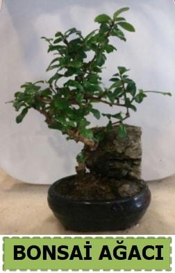 Bonsai ağacı japon ağacı satışı  Adana çiçek gönder hediye çiçek yolla