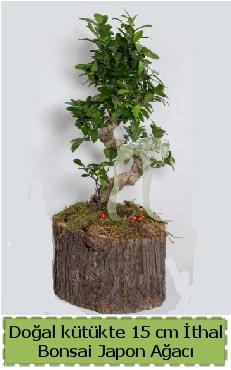 Doğal kütükte İthal bonsai japon ağacı  Adana çiçek yolla çiçek gönderme