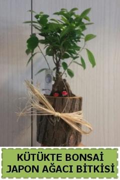 Kütük içerisinde doğal bonsai ağacı  Adana çiçek yolla çiçekçi telefonları