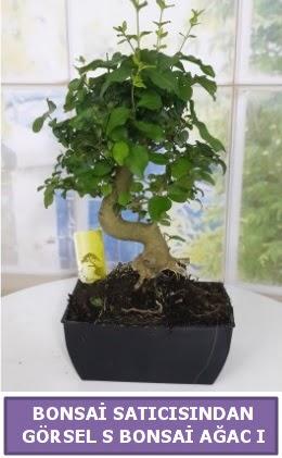 S dal eğriliği bonsai japon ağacı  Adana çiçek yolla çiçek satışı