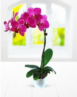 Tek dallı mor orkide  Adana çiçek yolla çiçek satışı