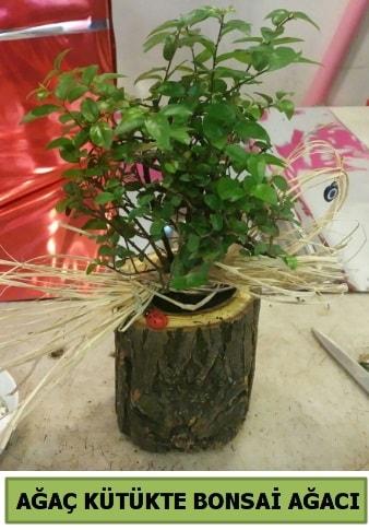 Doğal ağaç kütük içerisinde bonsai ağacı  Adana çiçek yolla çiçek gönderme sitemiz güvenlidir