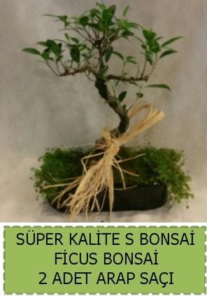Ficus S Bonsai ve arap saçı  Adana çiçek yolla çiçekçi telefonları
