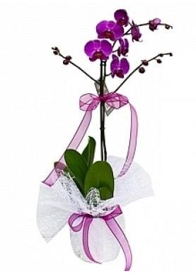 Tekli Mor Orkide  Adana çiçek yolla çiçek yolla