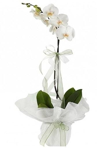 Tekli Beyaz Orkide  Adana çiçek gönder hediye çiçek yolla