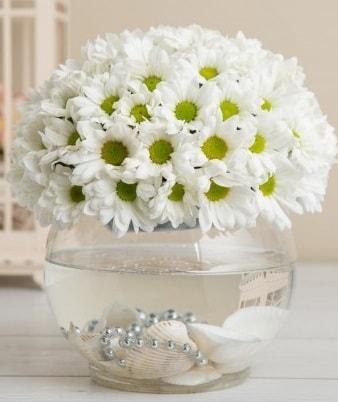 Fanusta beyaz Papatya  Adana çiçek yolla çiçek satışı