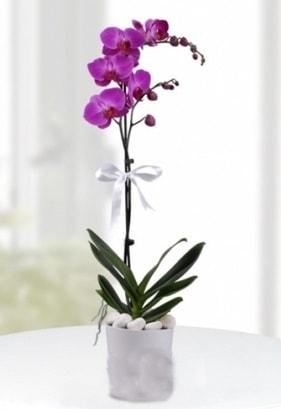 Tek dallı saksıda mor orkide çiçeği  Adana çiçek siparişi çiçekçiler